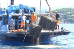 Alternative to the cellar: Italian winemaker maintains sparkling wine up to 5 years in the deep sea