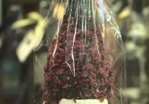Chocolate Covered Wine Bottles Sold At New Tysons Business