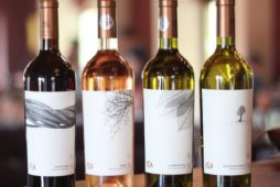 La Salina wine cellar wants to sell production on foreign markets